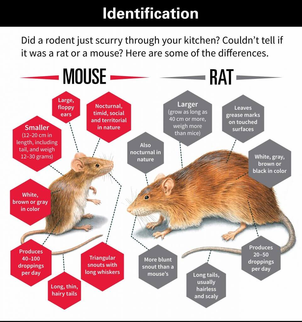 Plural form of mouse